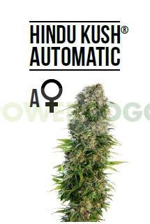 Hindu Kush Automatic (Sensi Seeds)-5 0