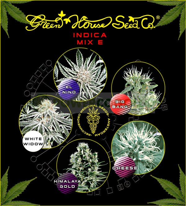 Indica Mix E (Green House Seeds) 1
