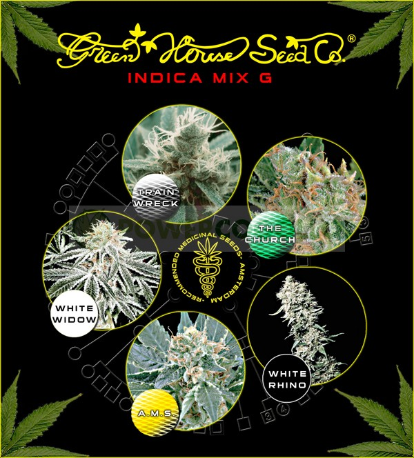 Indica Mix G (Green House Seeds) 1