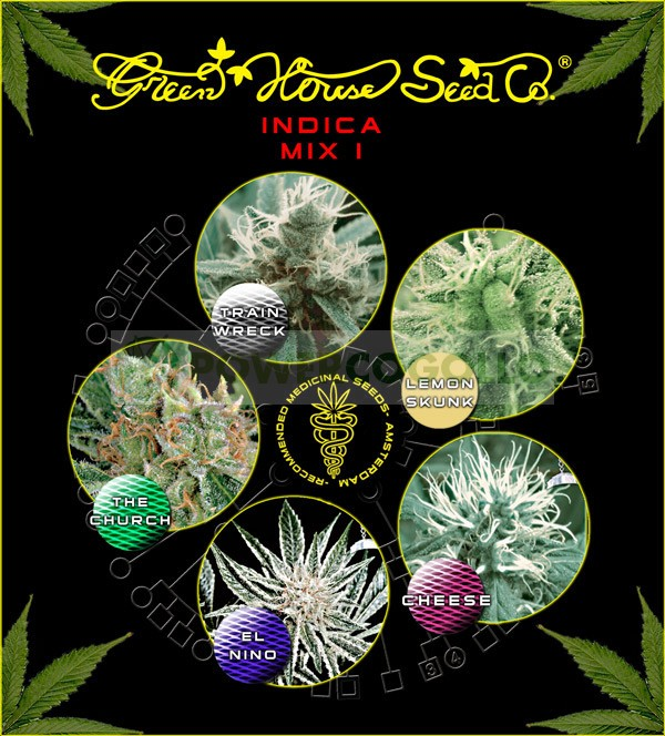 Indica mix I (Green House Seeds) 1