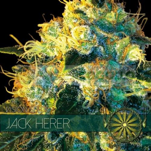 Jack Herer (Vision Seeds) Semilla Feminizada Marihuana Barata 2
