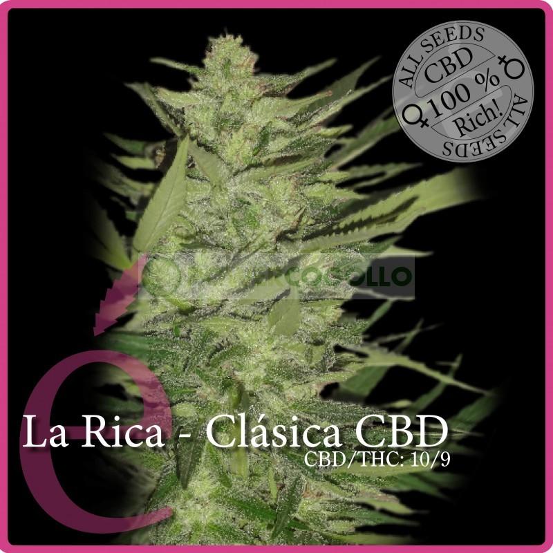 La Rica Clásica CBD (Elite Seeds) 0