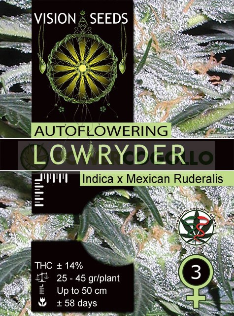Lowryder Auto Vision Seeds 2
