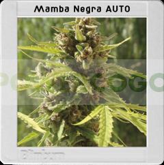 Mamba Negra Auto (Blim Burn Seeds) 0
