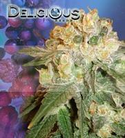 Marmalate (Delicious Seeds) Semilla de Cannabis Feminizada 1