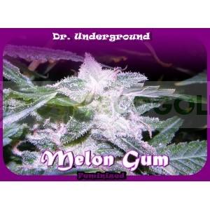 Melon Gum (Dr. Underground Seeds) 0