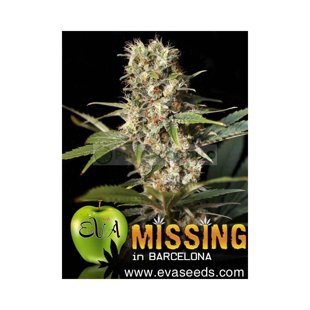 Missing in Barcelona (EVA SEEDS) 0