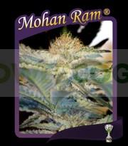 Mohan Ram (Sweet Seeds) Feminizada 0
