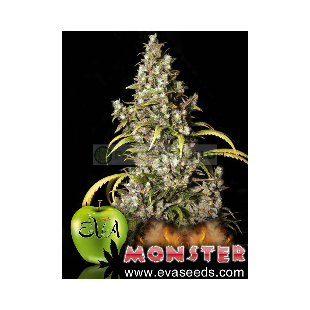 Monster (EVA SEEDS) 1