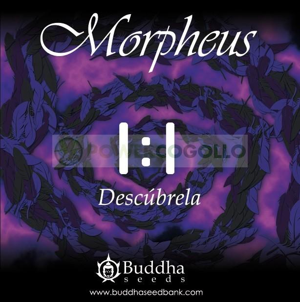 Morpheus CBD (Buddha Seeds) 1