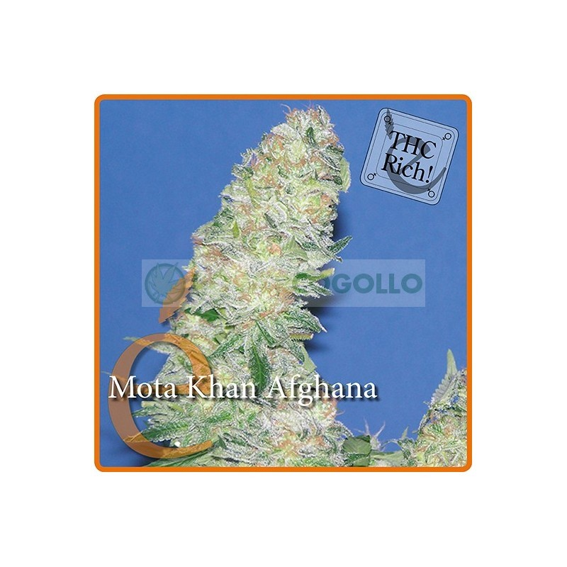 Mota Khan Afghana  1