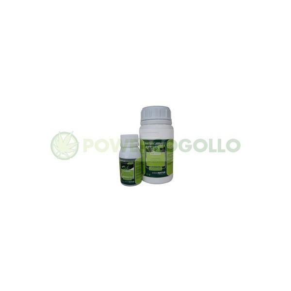 Naturscrop Allium 0