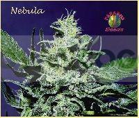 Nebula Feminizada 0
