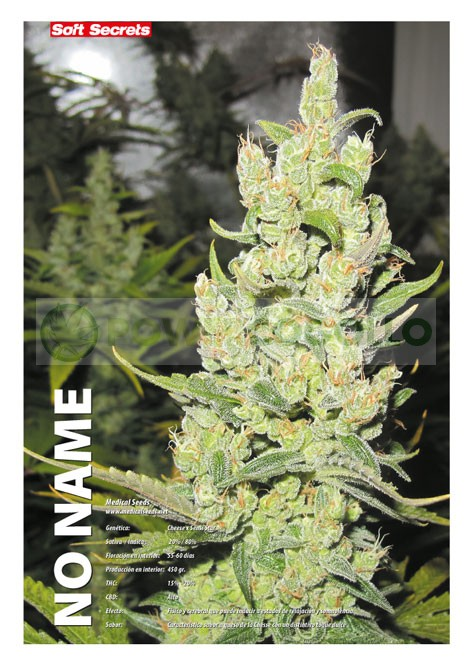 No Name (Medical Seeds) Feminizada marihuana 2