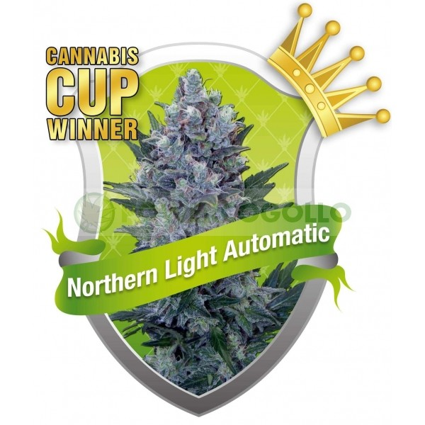 Northern Light Automatic (Royal Queen Seeds) Semilla Feminizada Marihuana Autofloreciente 100% 0