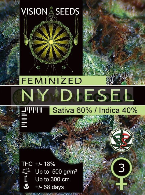 NY Diesel Vision Seeds Semilla Feminizada  1
