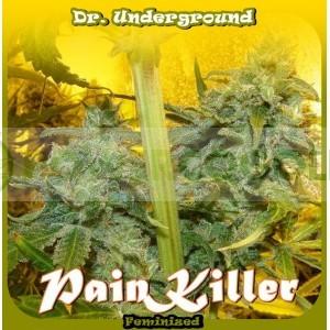 Painkiller (Dr. Underground Seeds) Semilla Feminizada Cannabis - Marihuana 0