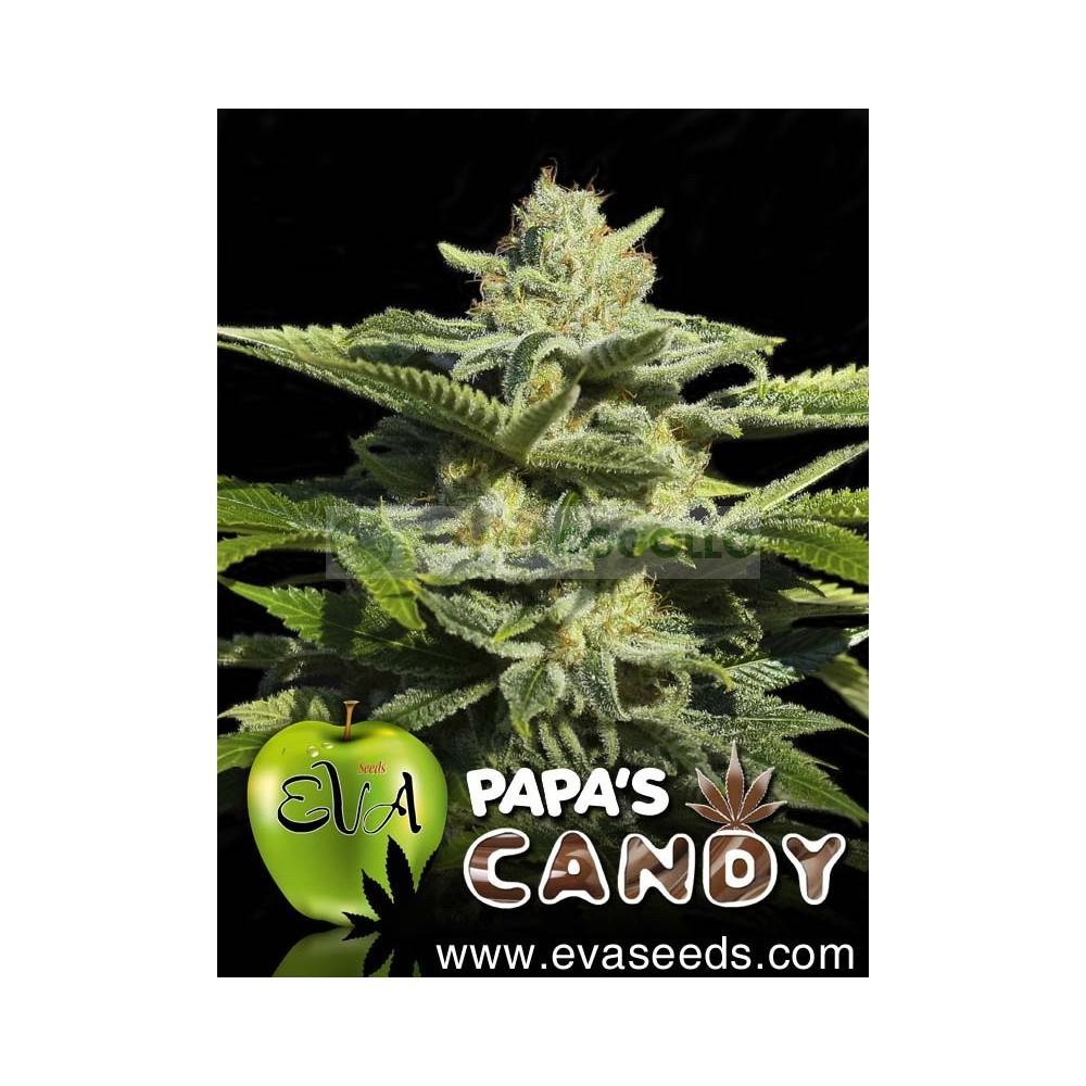 Papa´s Candy (EVA SEEDS) 1