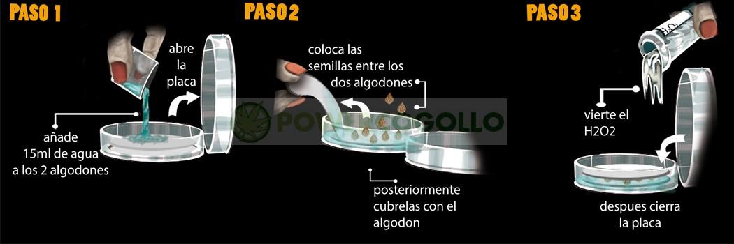 Germinador PRO- ( Semillas cannabis) 1