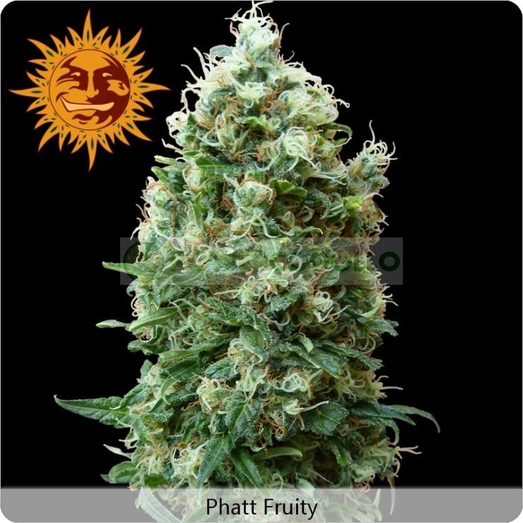 Phatt Fruity (Barney´s Farm Seeds) 1
