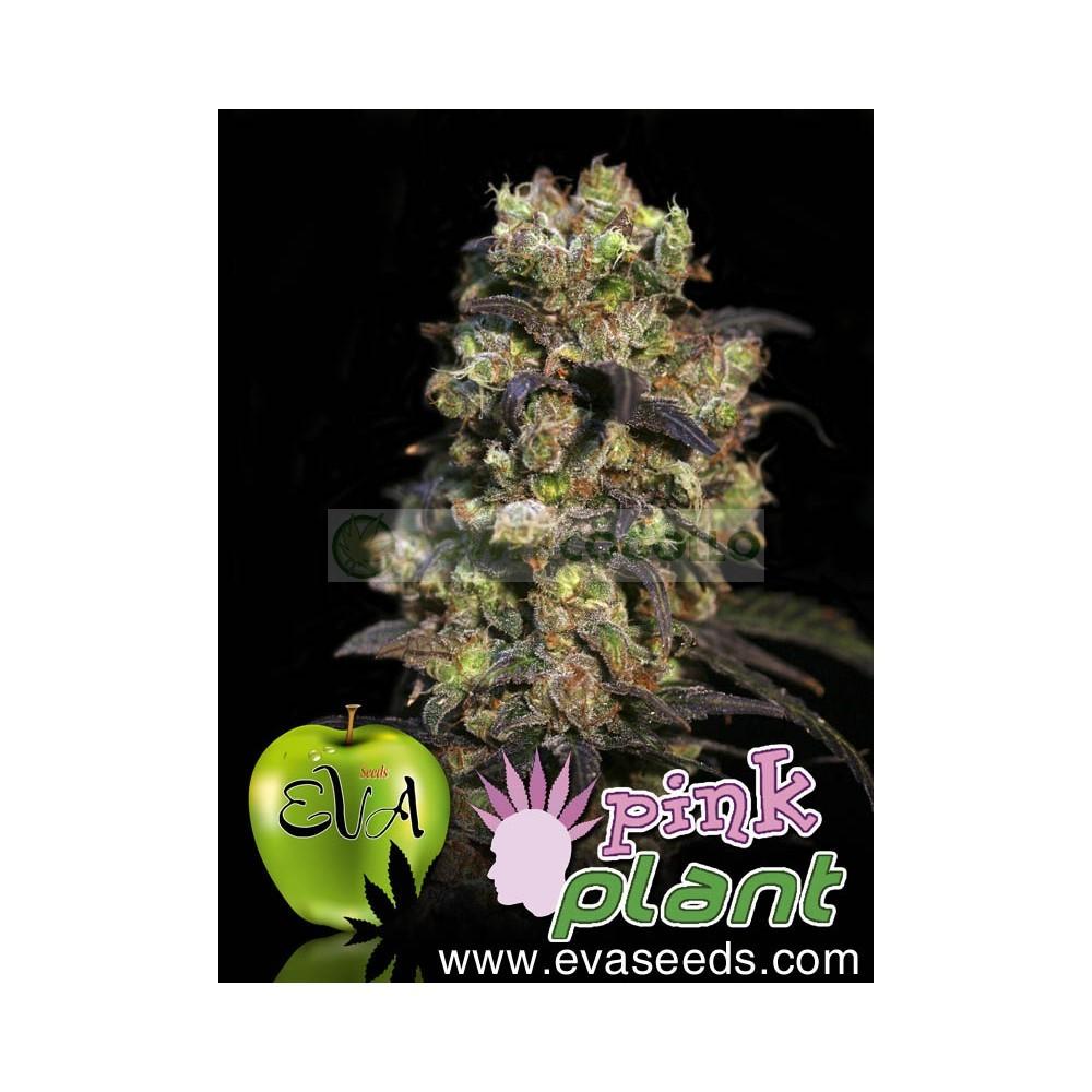 Pink Plant (EVA SEEDS) 0