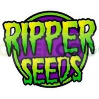 Sideral (Ripper Seeds) Semilla Feminizada de Cannabis Fotodependiente  Las mejores Semillas Feminizadas de Ripper Seeds en nuestras tiendas Dr.Cogollo - PowerCogollo tu GrowShop más barato online  Sideral (Ripper Seeds) Nueva variedad de Ripper Seeds.. 1