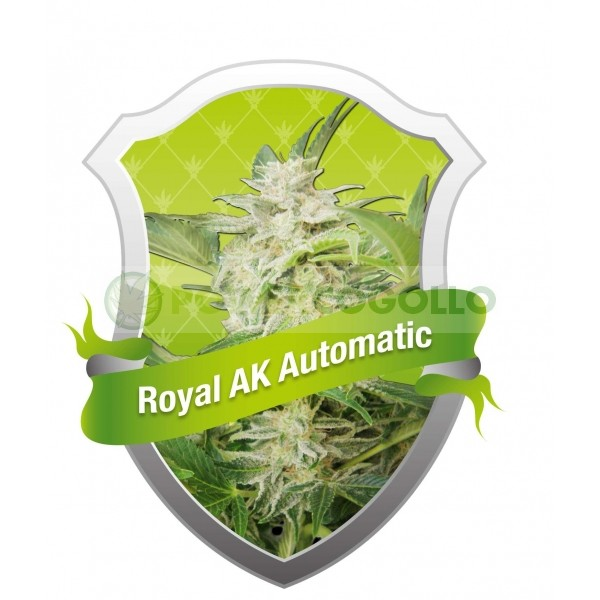 Royal AK Automatic (Royal Queen Seeds) Semilla  0