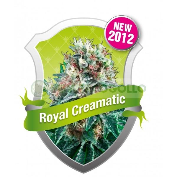 Royal Creamatic (Royal Queen Seeds) Semilla Autofloreciente cannabis-marihuana Feminizada 0