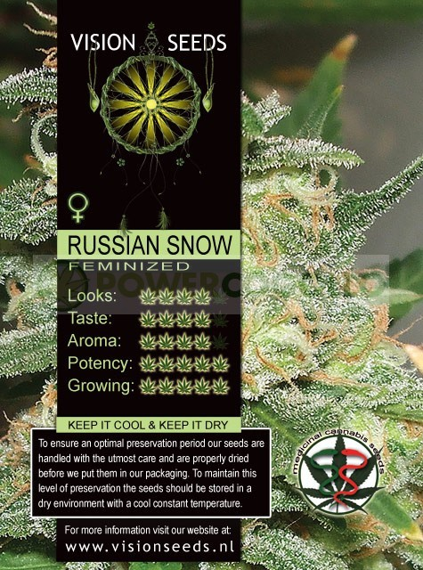 Russian Snow Vision Seeds  1
