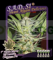 S.A.D. S1 (Sweet Afgani Delicious) 0