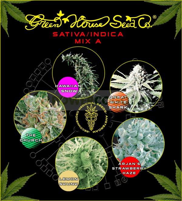 Sativa/Indica Mix B (Green House Seeds) 1
