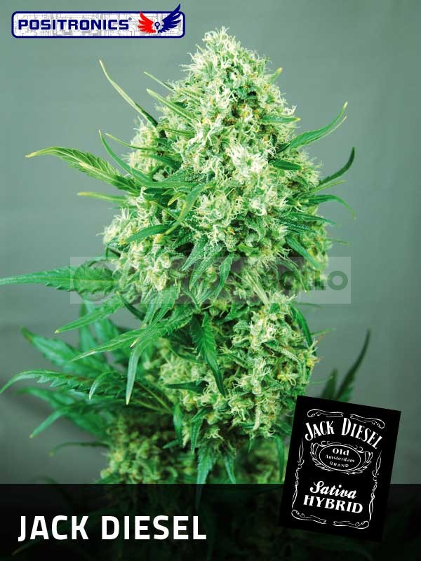Jack Diesel (Positronics Seeds) 1