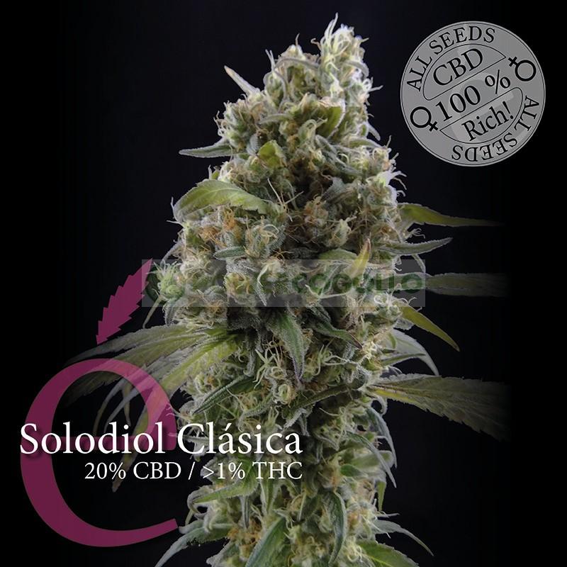 Solodiol Clásica (Elite Seeds) 0
