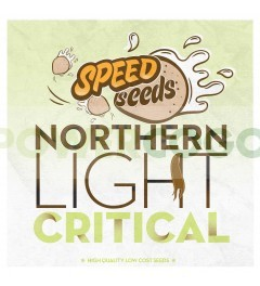 Northern Light x Critical 60 unds (Speed Seeds) 0