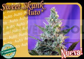 Sweet Skunk Auto 3G 0