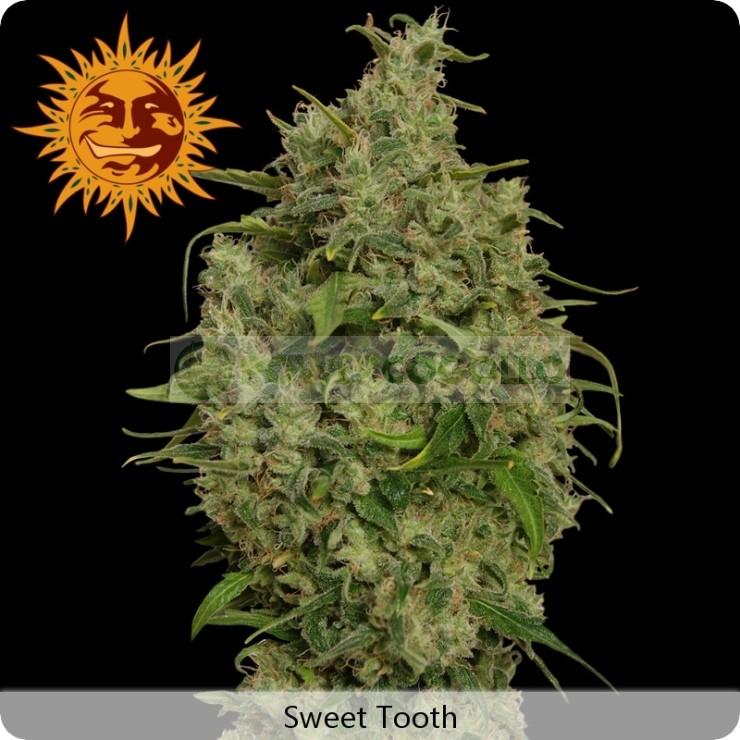 Sweet Tooth (Barney´s Farm Seeds)  Todas las semillas feminizadas de Barney´s Farm Seeds en nuestras tiendas Dr.Cogollo - Powercogollo.com tu growshop más barato online Ganadora de 3 Cannabis Cup. Famosa por su increible alto contenido en THC y gran rendi 0