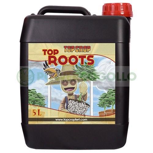 Top Roots (Top Crop)  1