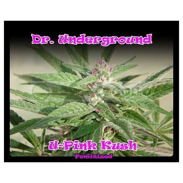 U-Pink Kush de Dr UnderGround 0