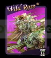 Wild Rose (Semillas) 0