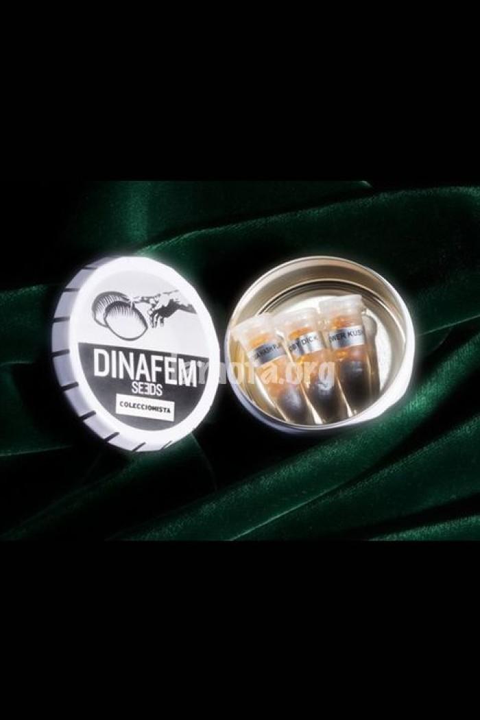 Edición Coleccionista #2 (Dinafem) 6 Semillas Feminizadas