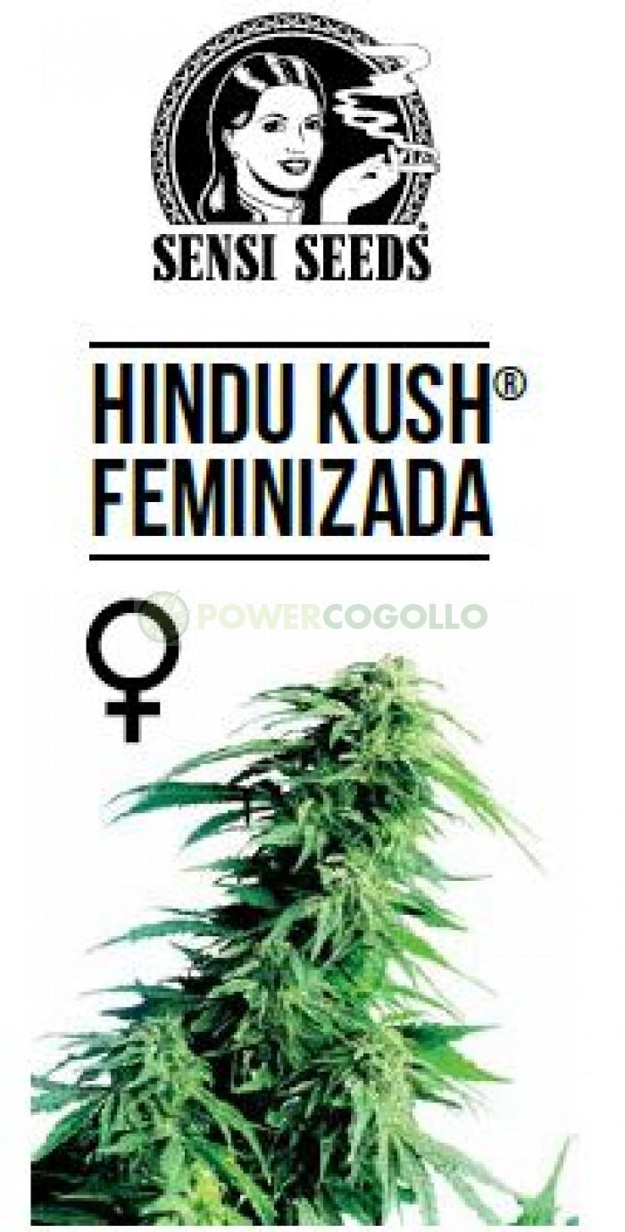 Hindu Kush Feminizada (Sensi Seeds)-5