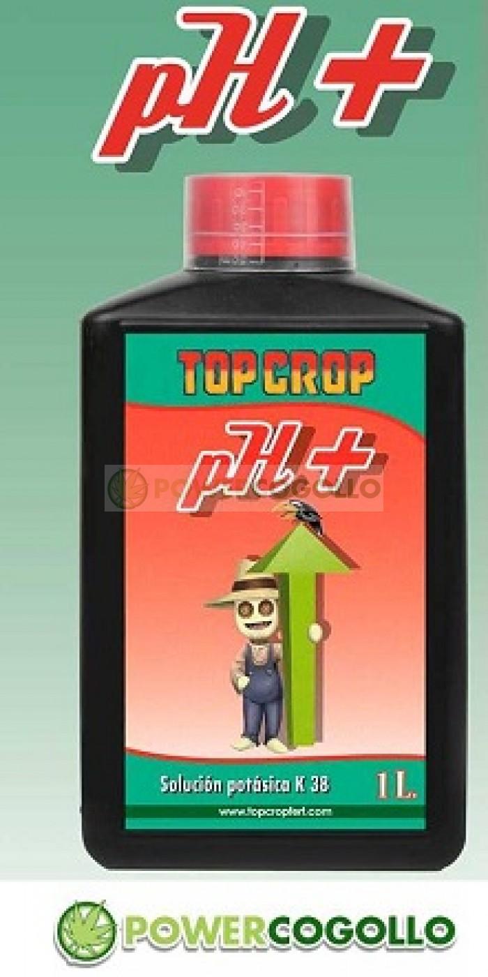 PH + Up (Top Crop)