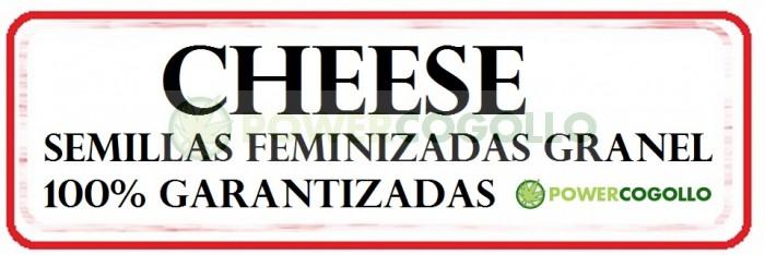 Cheese Semilla Feminizada 100% Granel
