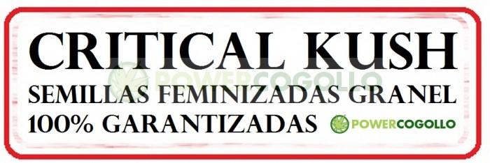 Critical Kush Feminizada 100% Granel