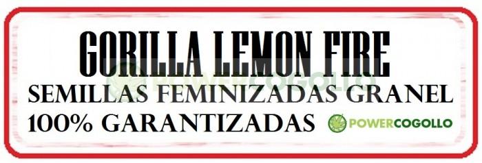Gorilla Lemon Fire Semilla Feminizada Granel