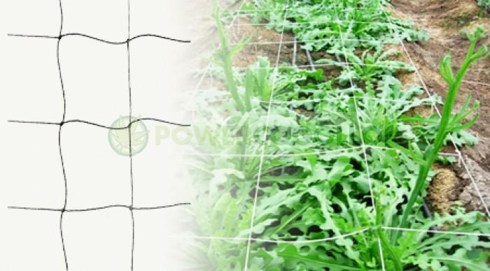 Malla de Cuadros Sea of Green cultivo cannabis