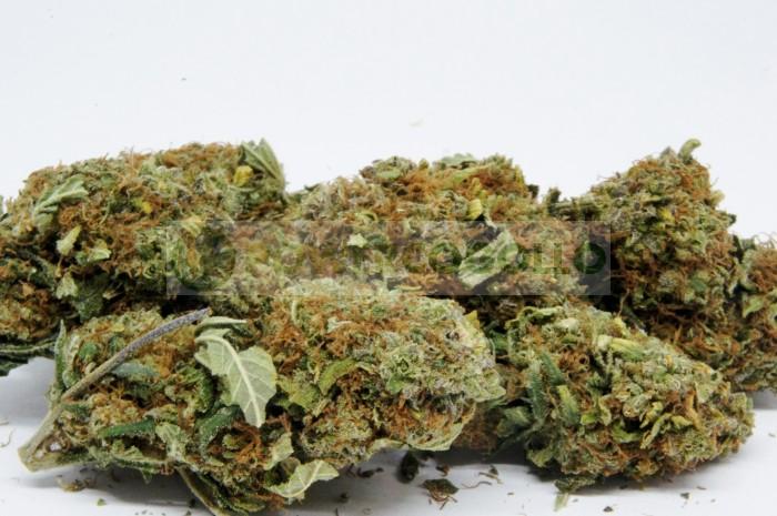 Flores CBD Orange #1(TerpeScience)