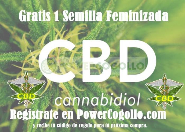Gratis Semilla CBD Feminizada Registro Web