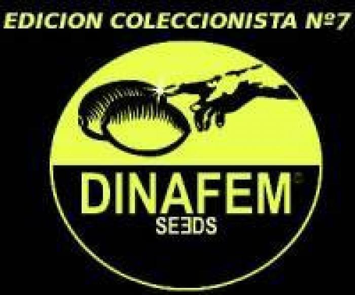 Edición Coleccionista #7 (Dinafem) 6 Semillas Feminizadas Cannabis
