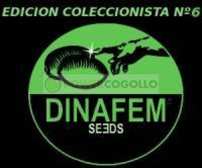 Edición Coleccionista #6 (Dinafem) 6 Semillas Feminizadas